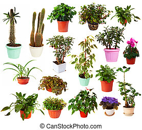 Set of houseplant in pots. Isolated on white - Set of...
