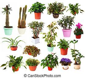 cserepes növény, cserépáru, állhatatos, elszigetelt, fehér