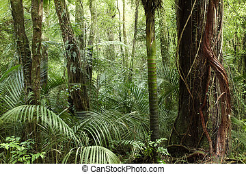 Tropical jungle - Lush foliage in tropical jungle
