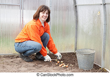 woman sets onion in soil - Young woman sets onion in soil at...