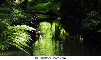 creek with green shining