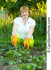 mature woman working in garden - Mature woman working in...