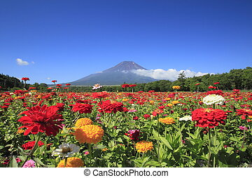 MtFuji and Zinnia - Mt Fuji and beautiful Zinnia in summer...