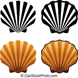 vector sea shells