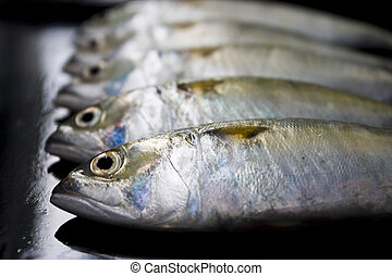 A group of mackerel on black background, Bangkok Thailand