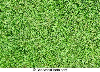 Long green uncut grass close up.