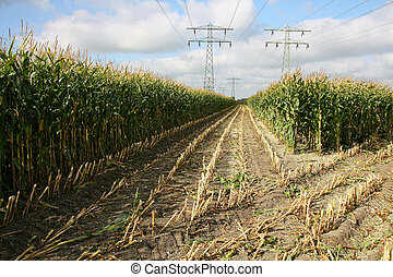 partly harvested cornfield with power lines in Leeuwarden...