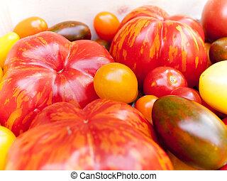 Heirloom tomato cultivars - Various heirloom tomato...