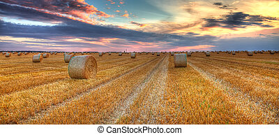 Sunset over the field - Beautiful sunset over a field with...