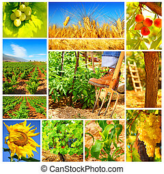 Harvest concept collage