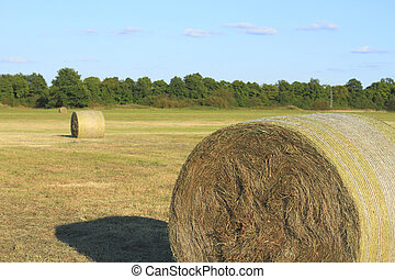 Hay bales on a meadow