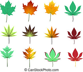 maple leaves assortment - assortment of green and autumn hue...