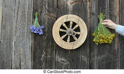 hanging medical herbs bunch on wall - hanging medical herbs...