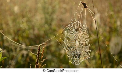 dewy spider web on autumn grass and wind