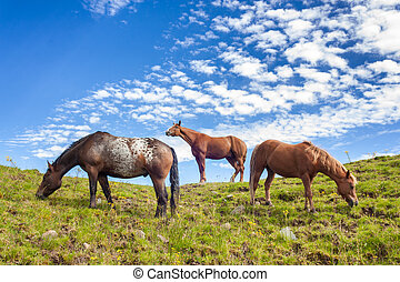 Three horses standing on a hill