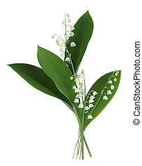 Lily of the valley - Branch of lily of the valley isolated...