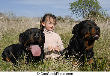 dangerous dogs and child - little girl and two dangerous...
