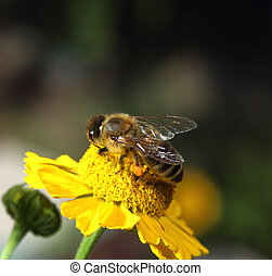 working bee - detailed photo of bee collecting pollen