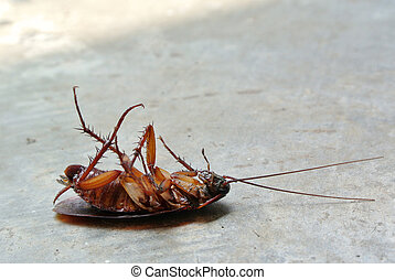 Dead Cockroach isolated on floor