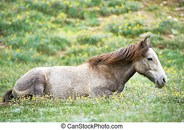 Young grey horse on green grass pasture
