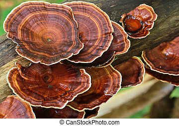 Mushrooms in the forest at Mae Hong Son province, Thailand