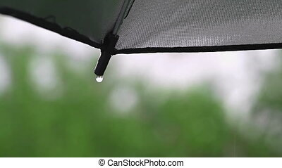 Rain drops on umbrella - Rain in nature coming down on...