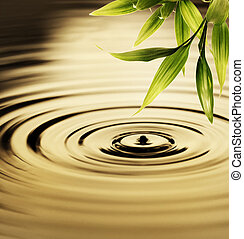 Fresh bamboo leaves over water