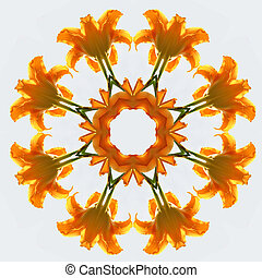 Orange daylily kaleidescope - Bright orange daylily becomes...