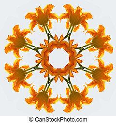 Orange daylily kaleidescope - Bright orange daylily becomes...
