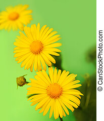 Yellow flowers over green background
