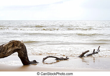 Drift wood on beach at low tide