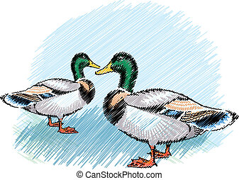 Ducks illustration