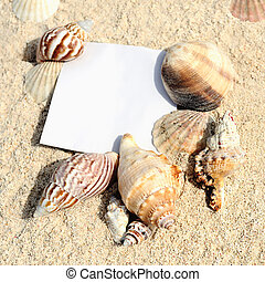 blank paper on white sand beach with starfish and shells...