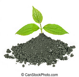 green plant and dirt