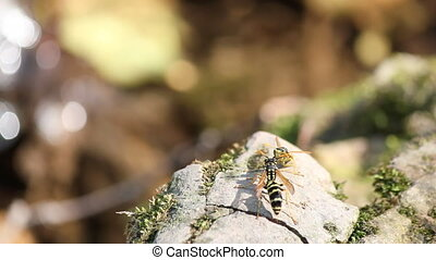 two wasp standing on rock near water