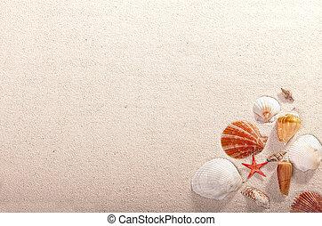 Seashell and starfish on sand