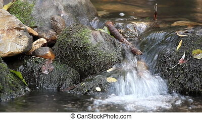stream fresh water