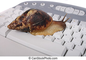 snail - nice big snail on the white keyboard