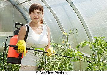Woman spraying tomato plant