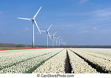 Dutch wind turbines behind a field of white tulips
