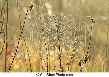 Spider web in a meadow on a foggy morning