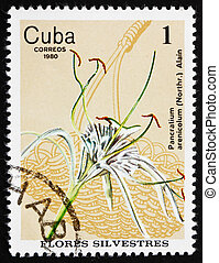 Postage stamp Cuba 1980 Spider Lily, Wildflower - CUBA -...