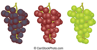 Grapes of different grades - Illustration three bunches of...