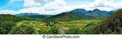 Taro Fields on Kauai Hawaii - A verdant green valley on the...