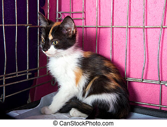 Homeless Kitten in a Cage - Lonely Homeless Kitten in a Cage...