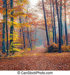Foggy autumn forest - Pathway through the autumn forest