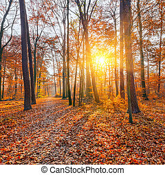 Sunset in the autumn forest - Vibrant sunset in the autumn...