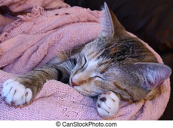 Comfy - a kitten in a blanket sleeping comfortably