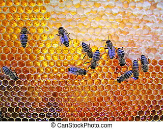 Nectar and honey - The bees of workers deliver in beehives...