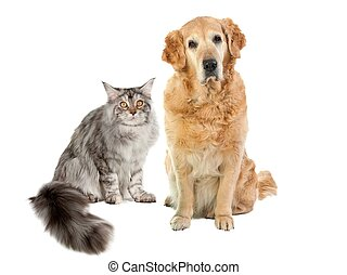Animal friends - cat and dog on a white background
